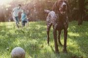 dog_grass