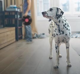 meradog_dog